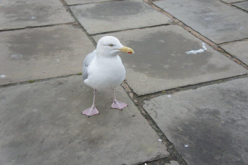 Vagga seagullen royaltyfri foto