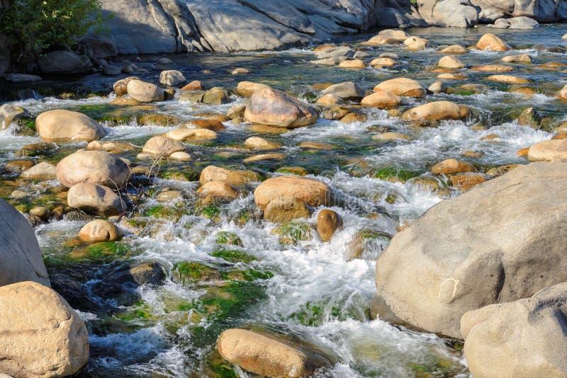 Vagga ställningar mot de styrkavit-vatten forsarna i floden arkivbild