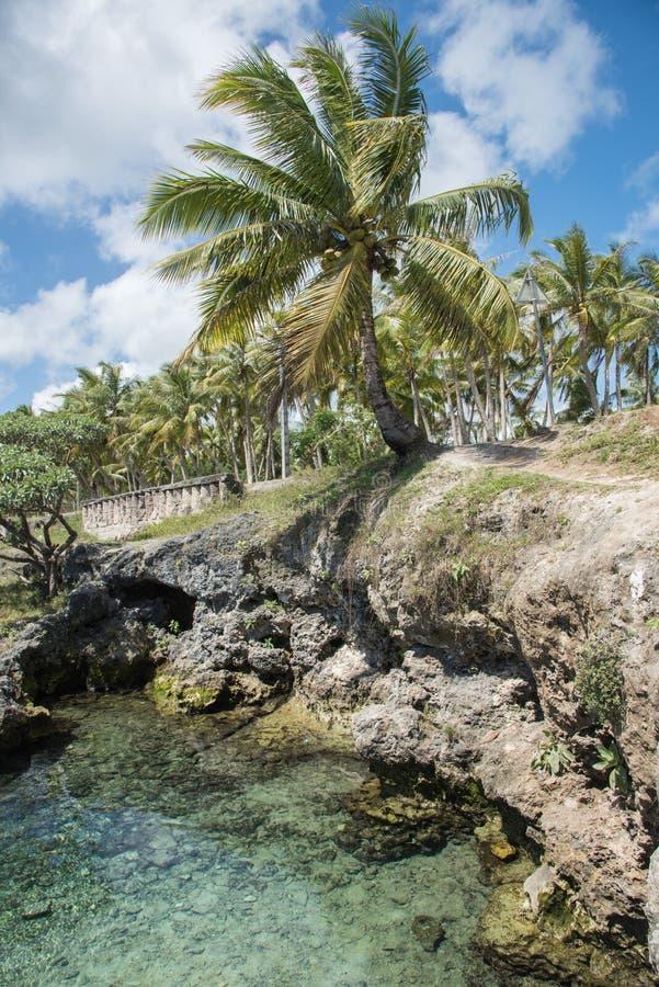 Vagga tips, och kokosnöten gömma i handflatan arkivbild