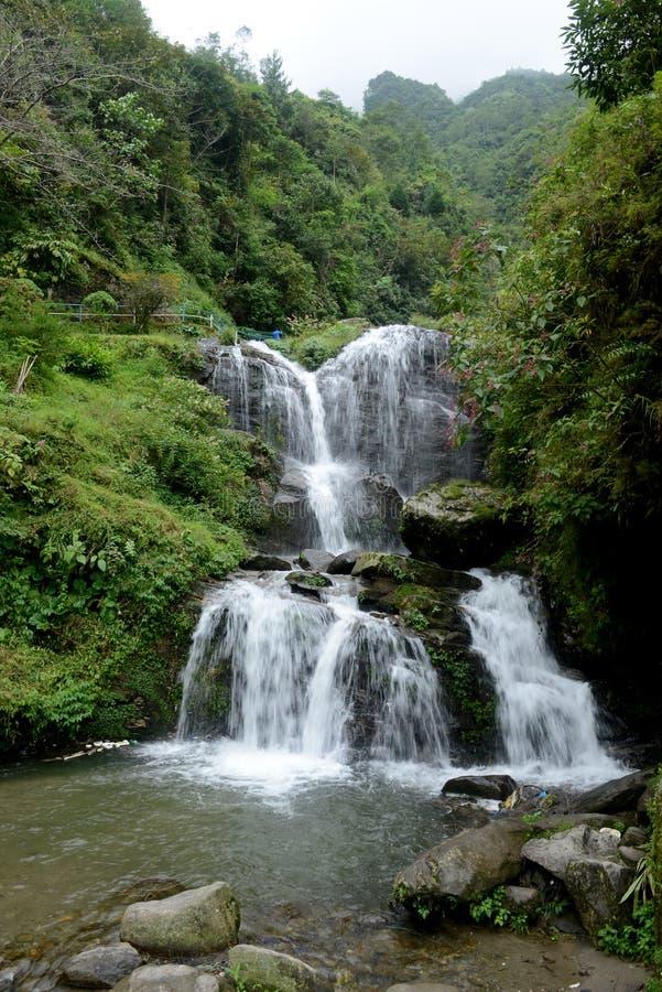 Vagga trädgården, Darjeeling royaltyfria bilder
