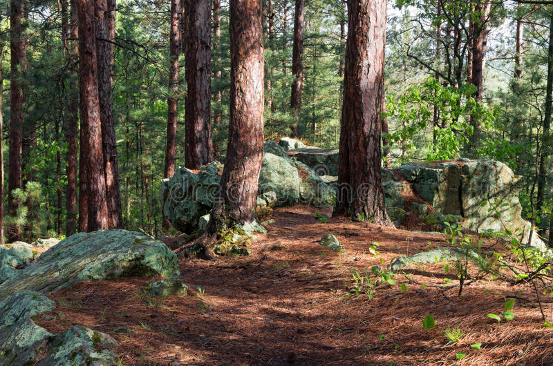 Vagga utlöparen på skogsmarkslinga arkivfoto