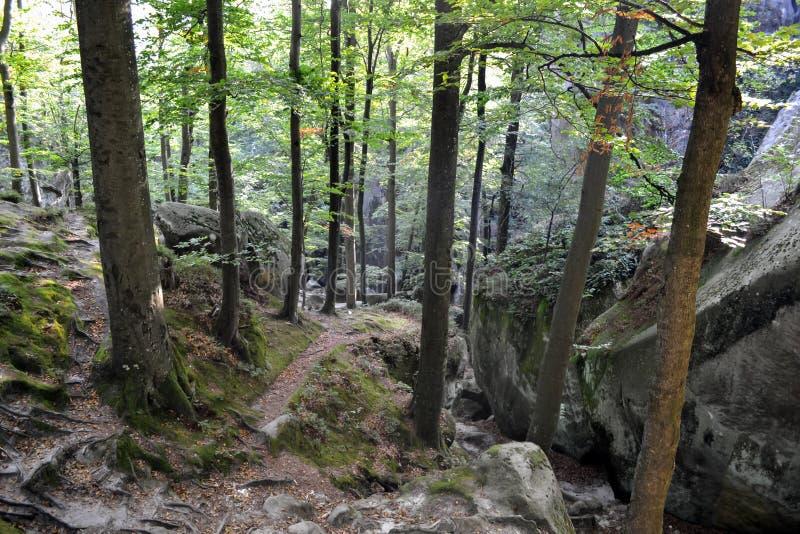 Vaggar himmel, berg en skog royaltyfria bilder
