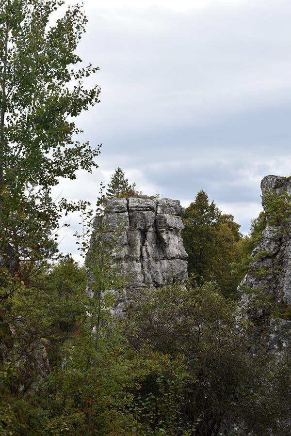 Vaggar i skog royaltyfri foto