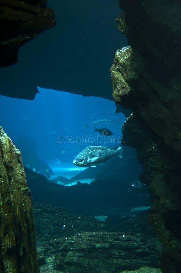 vaggar seabed arkivfoto