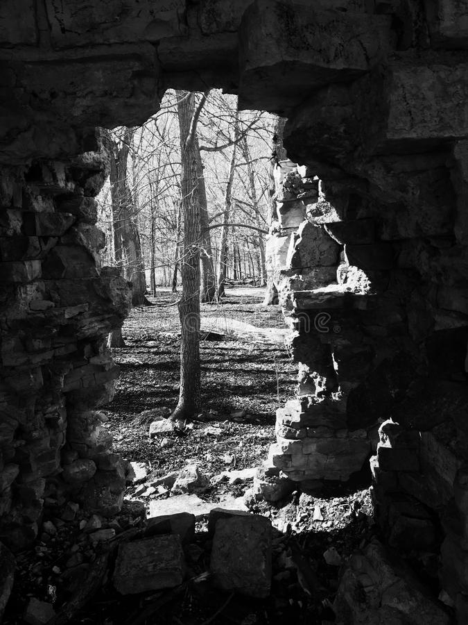 Vaggar skogen royaltyfri fotografi
