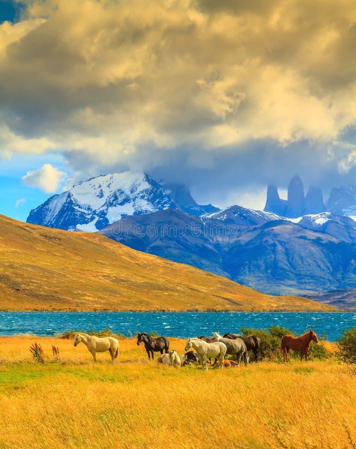 Vaggar Torres del Paine royaltyfri foto