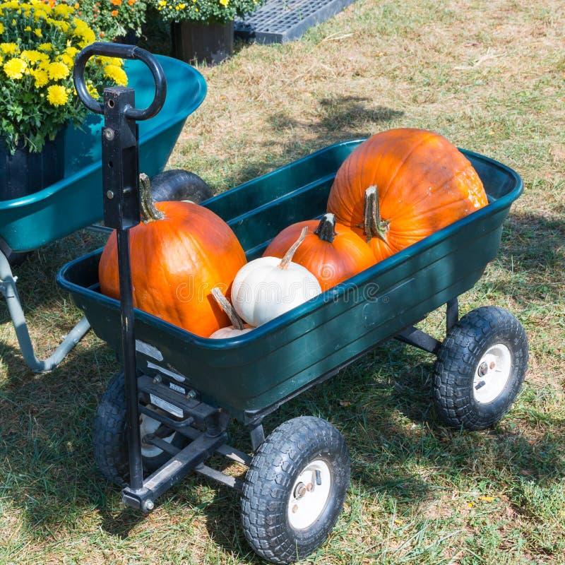 Vagn med färgrika pumpor på pumpalappen royaltyfri bild