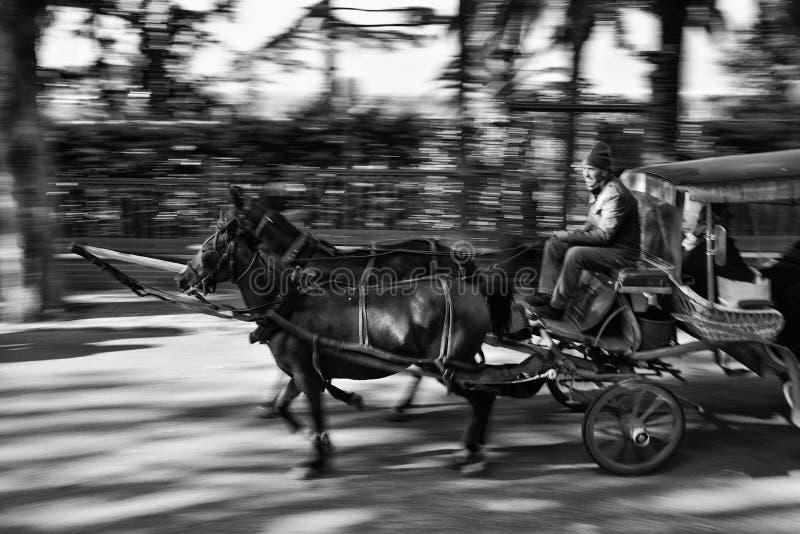 Vagn med hästar och chauffören på gatan av sadelpåseön arkivbilder