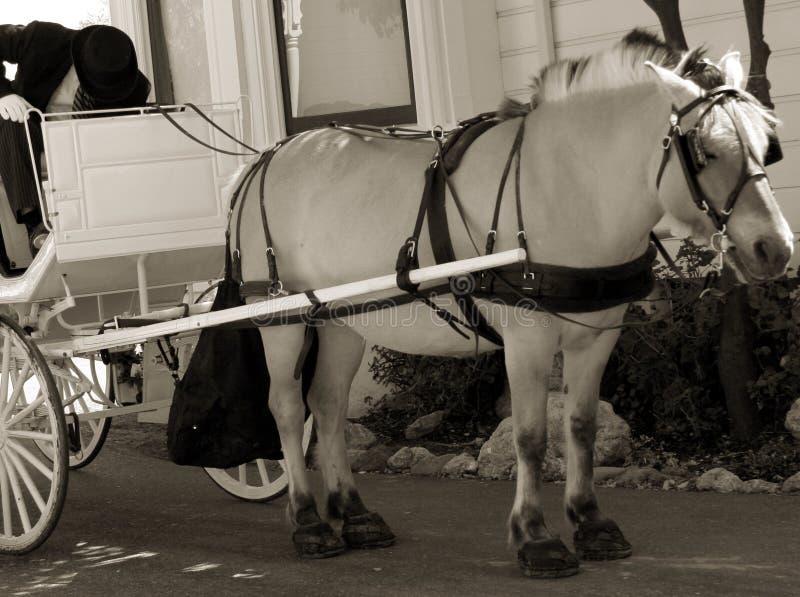 vagn tecknad häst royaltyfri foto