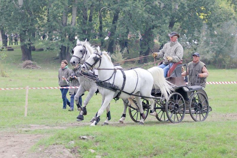 vagnshästar två royaltyfri fotografi