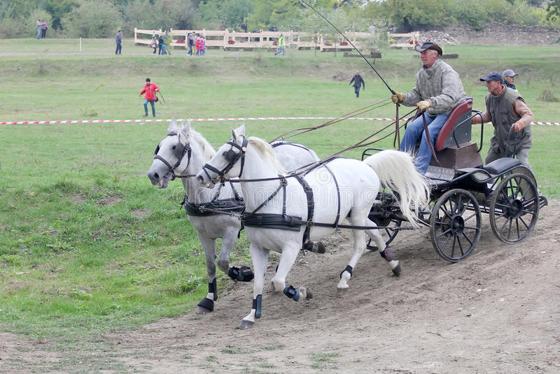 vagnshästar två royaltyfri foto