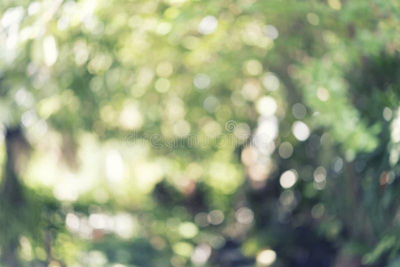 Vago degli alberi in parco, modello leggero del bokeh sottragga la priorit? bassa immagine stock