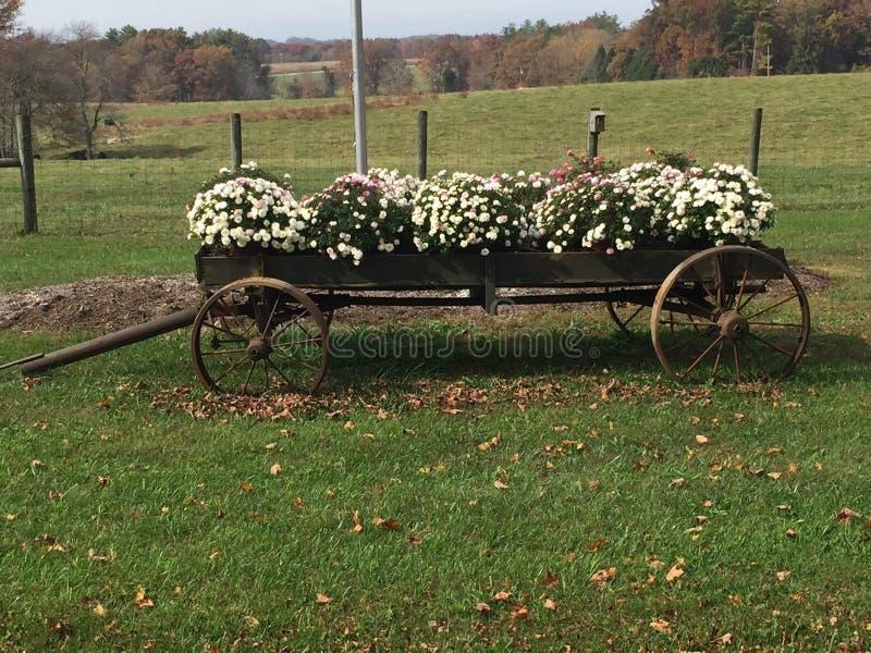 Vagone del paese con i fiori immagine stock libera da diritti