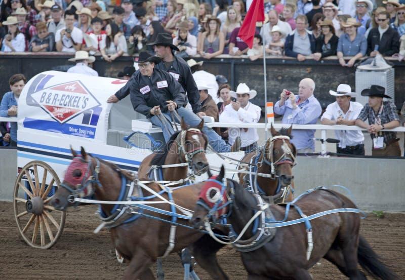 Vagone e cavalli Calgary immagini stock
