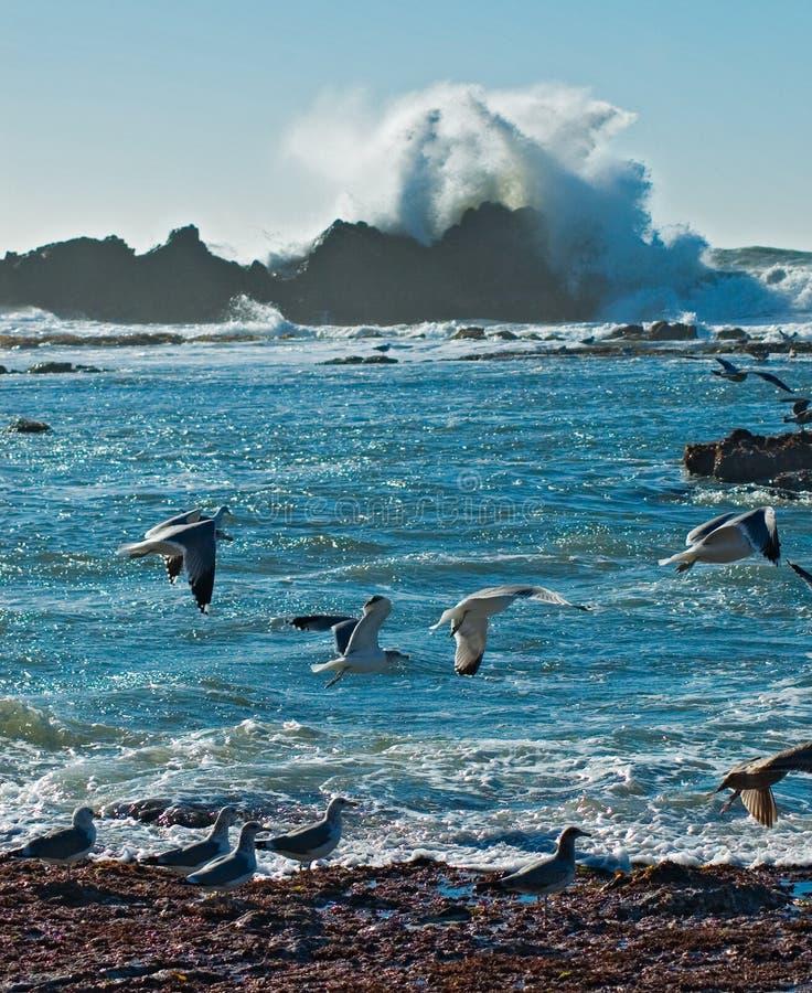 Vague déferlante et mouettes d'océan photographie stock libre de droits