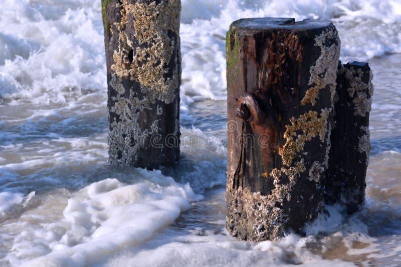 Vague se cassant et éclaboussant le long des empilages en bois photos stock