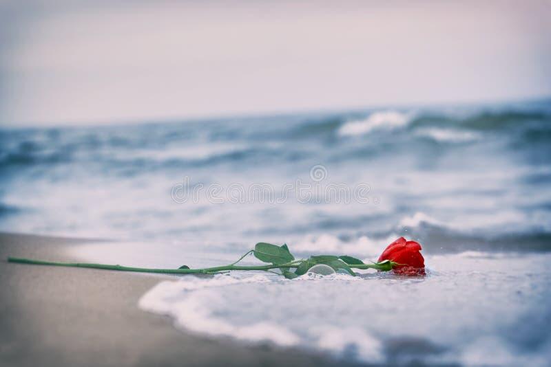 Vagues enlevant une rose rouge de la plage cru Amour photos libres de droits