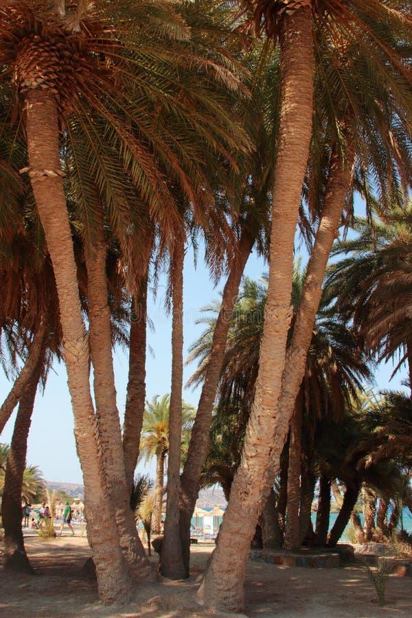 Vai惊人的棕榈滩的看法与蓝色,在克利特的绿松石水的 库存照片