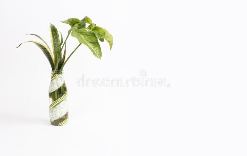 Vai o templete tropical verde da placa da decoração da folha imagem de stock