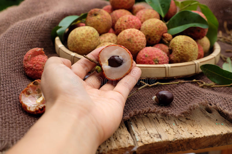 Vai thieu Vietnam, lychee fruits. Close up of litchi fruit or lychee fruits, a tropical agriculture product at Luc Ngan, Bac Giang, Vietnam, basket of Vai thieu royalty free stock images