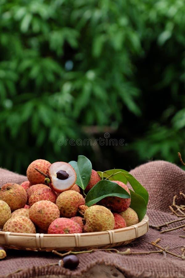 Vai thieu Vietnam, lychee fruits. Close up of litchi fruit or lychee fruits, a tropical agriculture product at Luc Ngan, Bac Giang, Vietnam, basket of Vai thieu royalty free stock image