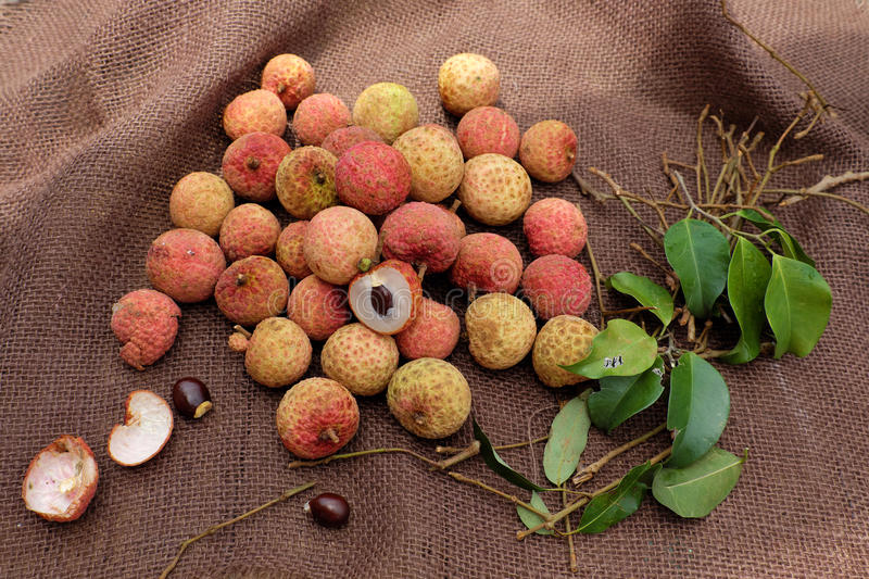 Vai thieu Vietnam, lychee fruits. Close up of litchi fruit or lychee fruits, a tropical agriculture product at Luc Ngan, Bac Giang, Vietnam, basket of Vai thieu royalty free stock photography