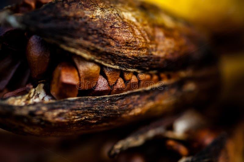 Vaina de la semilla del iris foto de archivo libre de regalías
