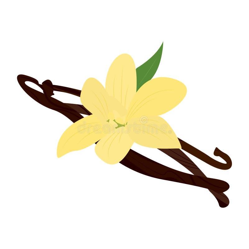 Vaina de la vainilla con la flor libre illustration