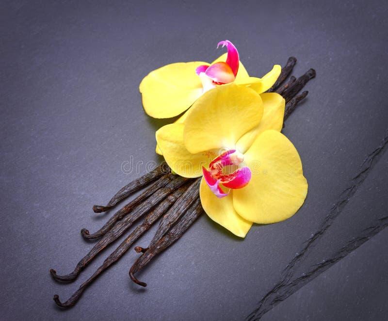 Vaina de la vainilla con las flores encendido en negro fotos de archivo libres de regalías