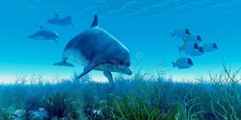 Vaina del delfín stock de ilustración
