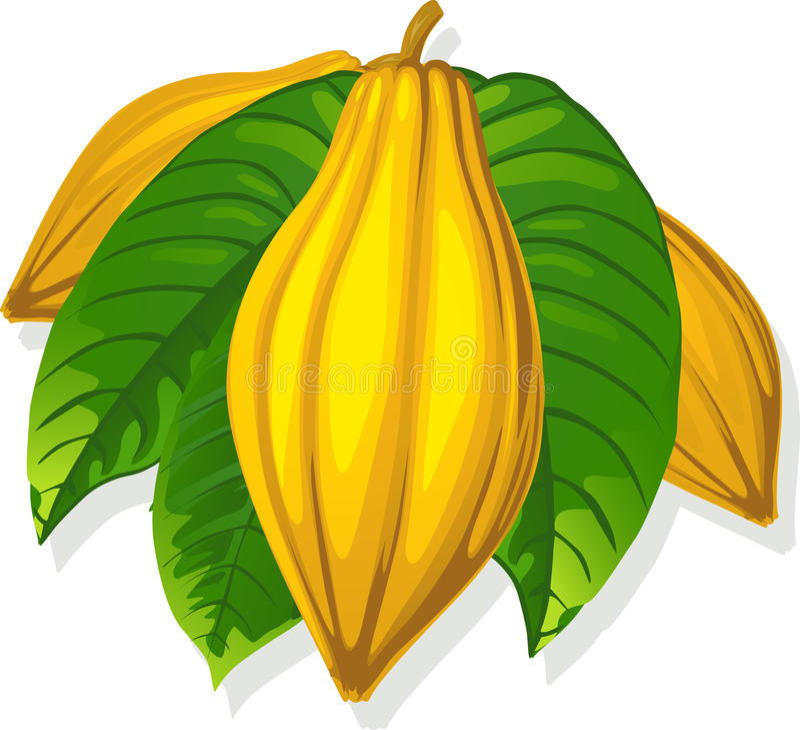 Vaina y hoja - ejemplo del cacao del vector libre illustration
