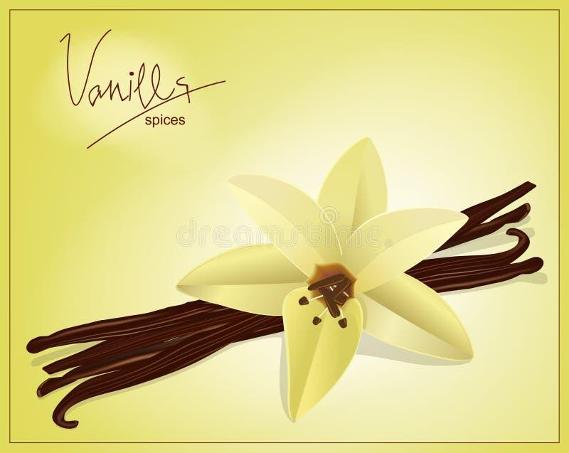 Vainas de la flor y de la vainilla del vector ilustración del vector