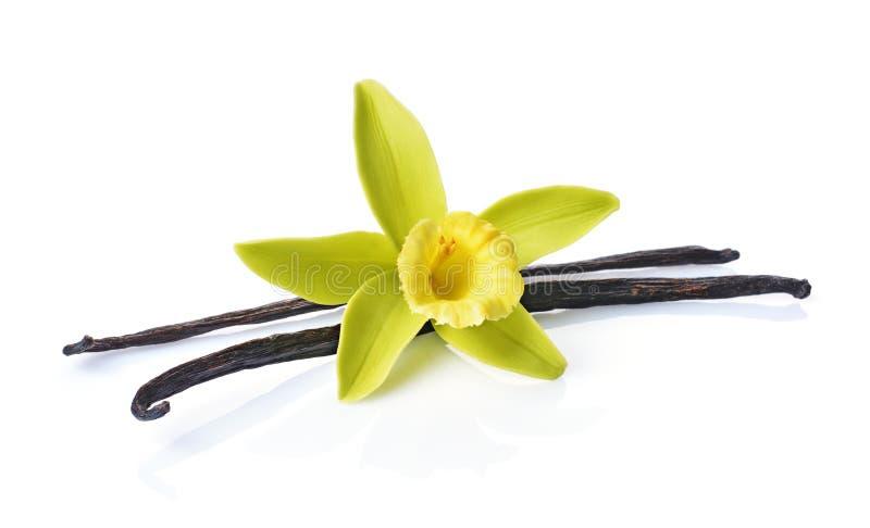 Vainas de la vainilla con una flor como ingrediente para cocer foto de archivo libre de regalías