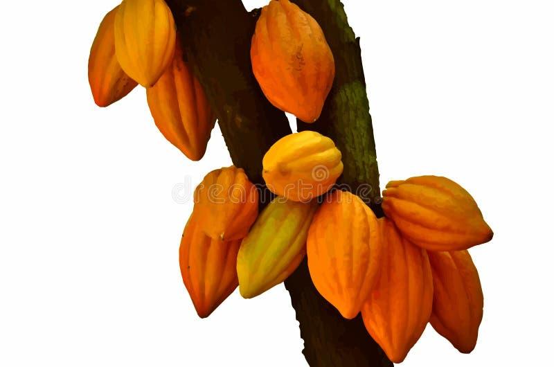 Vainas del cacao stock de ilustración