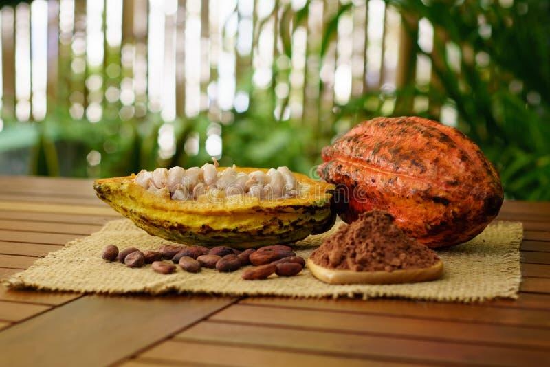 Vainas del cacao, habas del cacao y polvo crudos en la tabla de madera imágenes de archivo libres de regalías