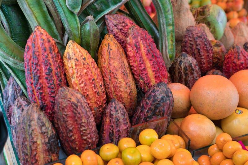 Vainas del cacao usadas para hacer el chocolate imagen de archivo