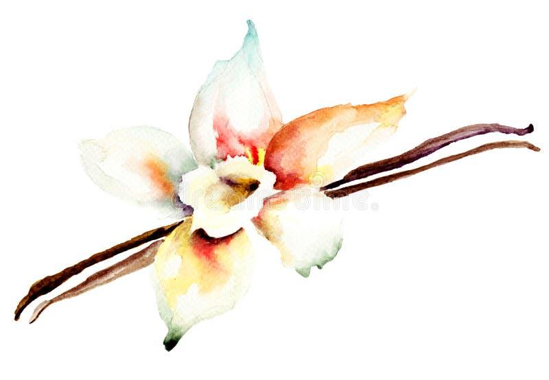 Vainas y flor de la vainilla ilustración del vector