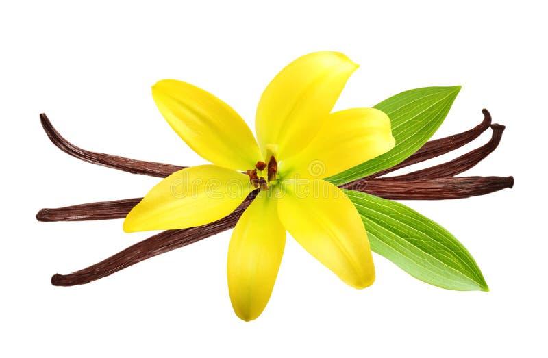 Vainas y flor de la vainilla fotografía de archivo
