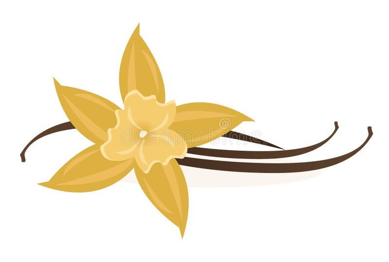 Vainilla Bean Flower stock de ilustración