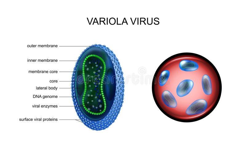 Vaiolo, virus di vaiolo, royalty illustrazione gratis