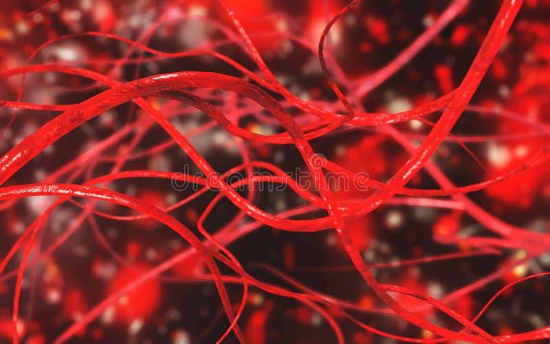 Vaisseaux sanguins Système circulatoire illustration stock