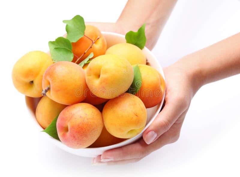 Vaisselle avec les abricots mûrs. photo stock