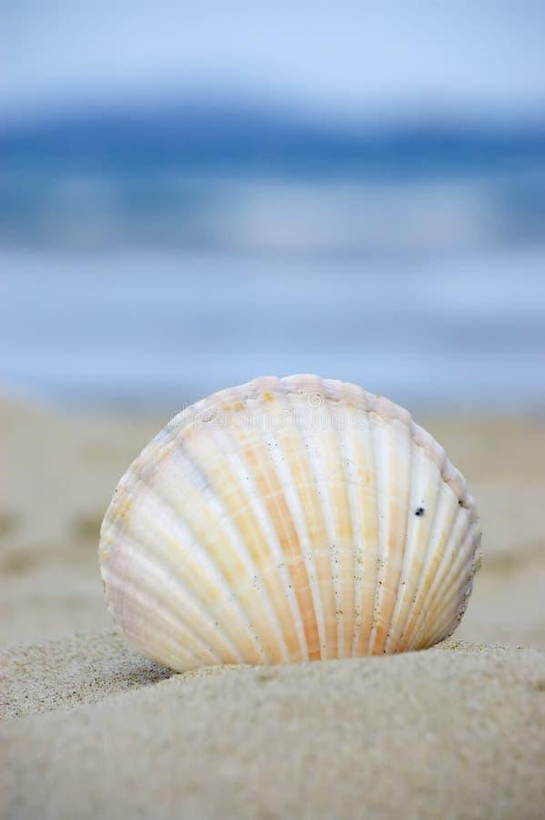 Vakantie bij het strand royalty-vrije stock afbeelding