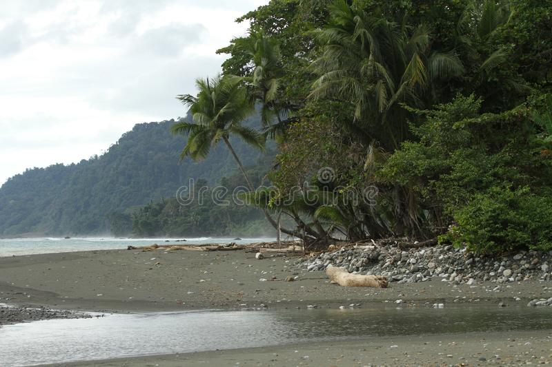 Costa Rica corcovado. A beautiful beach in corcovado national park, costa rica royalty free stock images