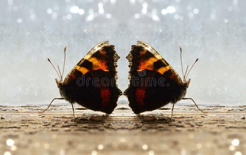 vakter av fjärilar för förälskelse två går vid det gamla fönstret royaltyfri bild