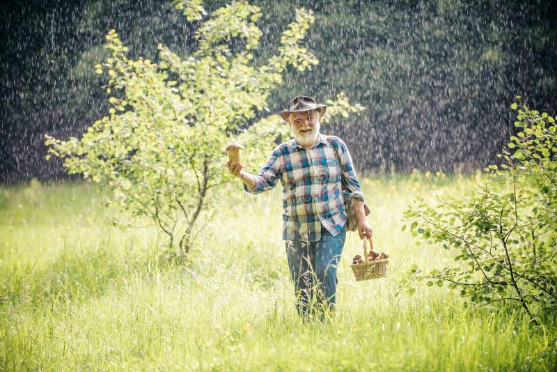 Val av champinjoner Lycklig farfar med champinjoner i busket som jagar champinjonen S?kandet f?r champinjoner i tr?na royaltyfri foto