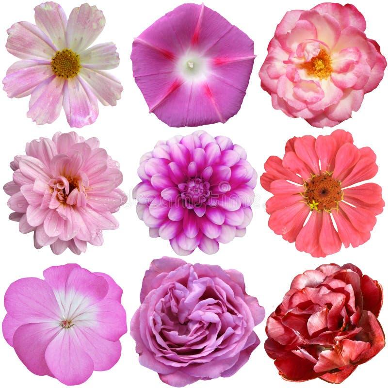 Val av isolerade olika blommor arkivfoto