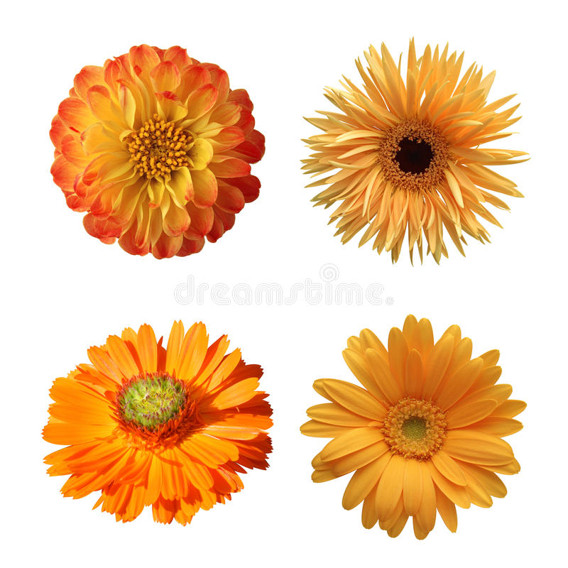 Val av isolerade olika blommor arkivbilder
