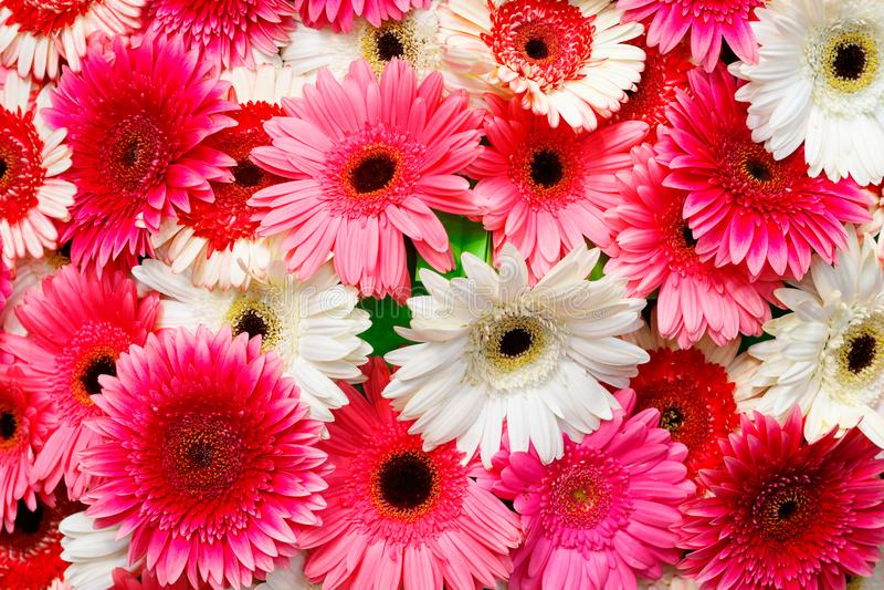Val av olika färgrika blommor som en bakgrund arkivbilder