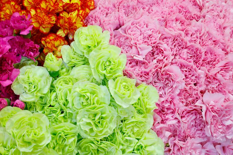 Val av olika färgrika blommor som en bakgrund royaltyfri bild